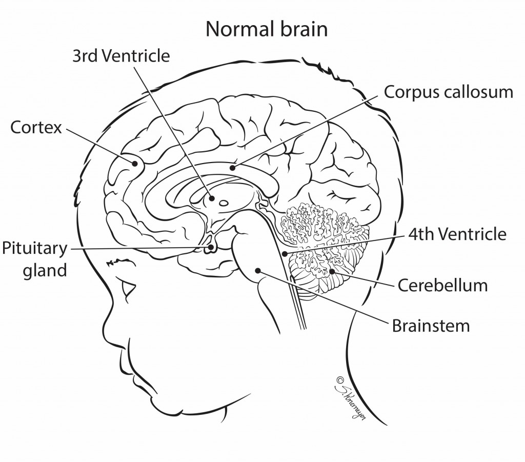 midsagital_brain_labels